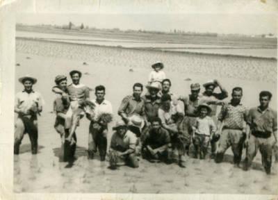 Plantadors d'arròs al Delta de l'Ebre