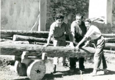 Transport de troncs a una serradora