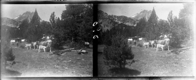 Campament amb Bestiar boví a la muntanya i un excursionista