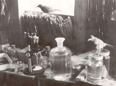 Jeg ser! Mikroskopets utvikling på 1800-tallet