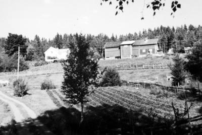 Fossengen nordre, sommerren 1964.