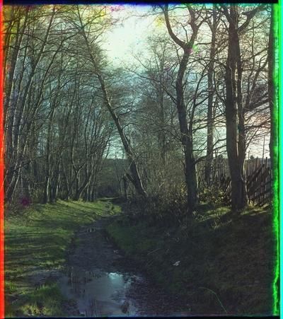En sti omkranset av trær.