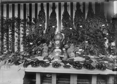 Utstilling av grønnsaker.