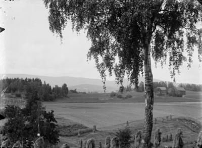 utsikt, kulturlandskap, jorder, gårder