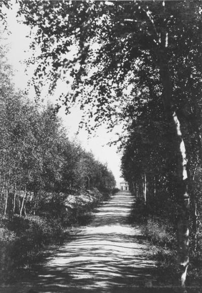 Prestegårdsalleen/Prestegårdsveien i Kirkenes