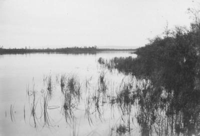 Strandparti fra Salmijärvi, sett fra sydenden av vannet.