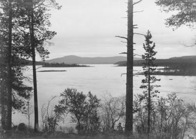 Vaggetem i Pasvikdalen