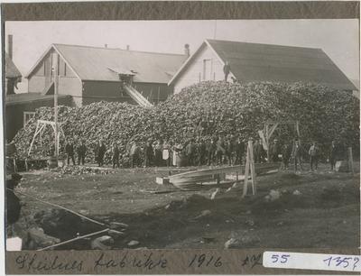Guanofabrikken på Steilneset, ca. 1916