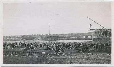 Fiskehoder på østsiden av Skagen, 1930-tallet
