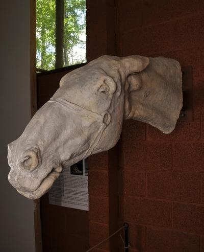 Helferd, hestehovud
