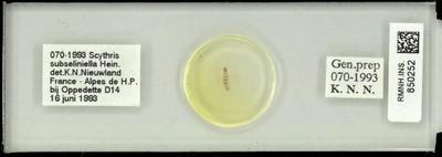 Scythris subseliniella Hein