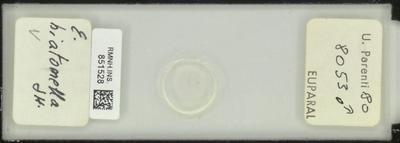 E. biatomella Stt.