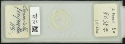 Cosmiotes freyerella Hb