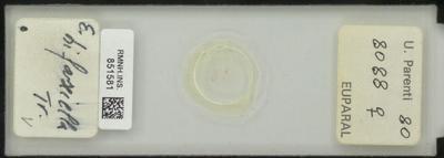 E. bifasciella Tr