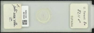 E. pollinariella Z
