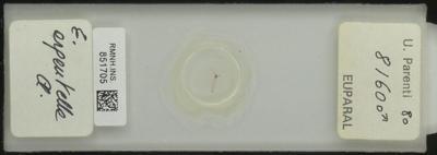 E. erpeutelle A.