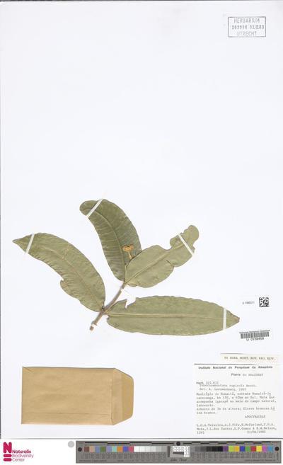 Tabernaemontana rupicola Benth.