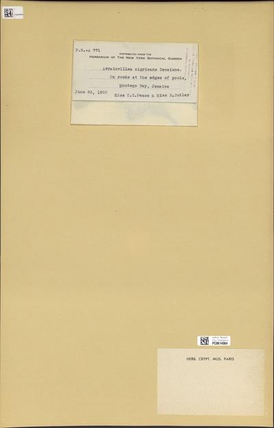 Avrainvillea nigricans