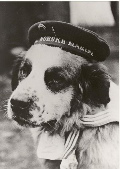 Bamse - marinens skipshund