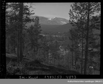 Landskapsmotiv fra skogen i Øvrebygda ved Skjoldgrenda