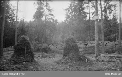 Gravene fra 1600-tallet i Nordbergskogen.