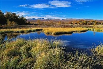 Fokstumyra naturreservat