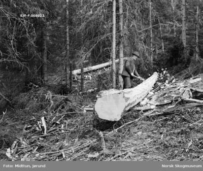 Tømmerhogst på barmark på ukjent sted i Telemark i 1930