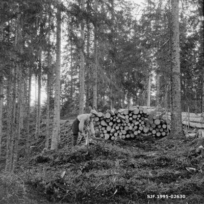 Skogsarbeider i aktivitet med hakke ved siden av ei tømmerlunne i granskog
