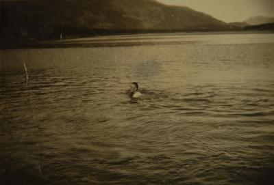 Mann bader i fjord eller vann