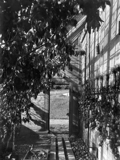 Drivhus interiør