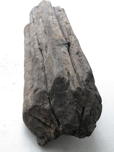 Haematoxylon Campecheaneum