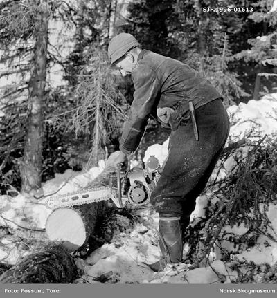Kapping (aptering) av nyfelt grantre i Vestre Gausdal i mars 1967