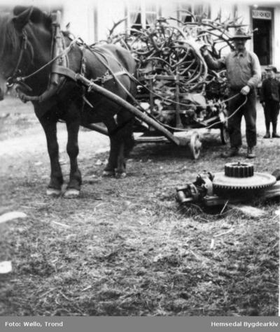 Knut Fauske (1887-1966) med eit lass reinshorn