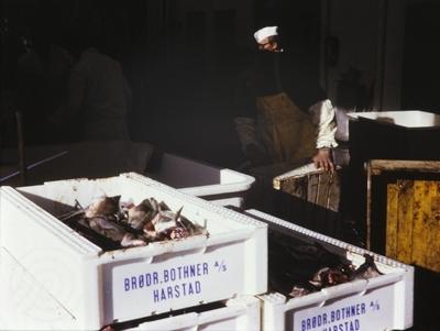 Kasser med fisk
