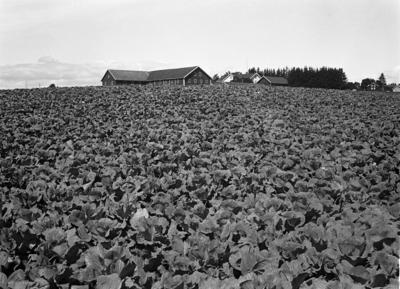 Gården Evang østre i Ø
