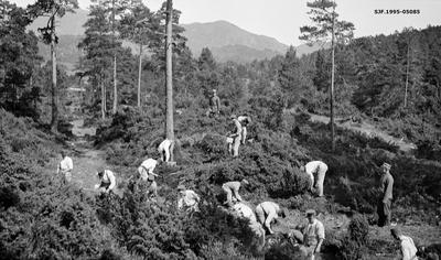Skogplanting under skogrekruttskolen på Ulven i Os i Hordaland sommeren 1932