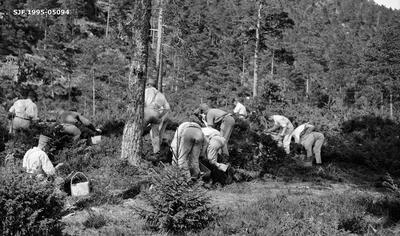 Planteaktivitet under skogrekruttskolen på Ulven i Os i Hordaland sommeren 1932