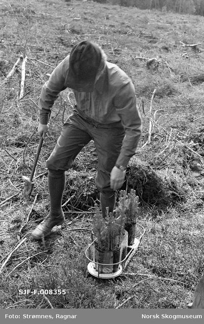 «Skogkulturforsøk på Gardermoen 1974.»«Skogforvalter Åge Froland demonstrerer planting av torvbrikettplanter.»