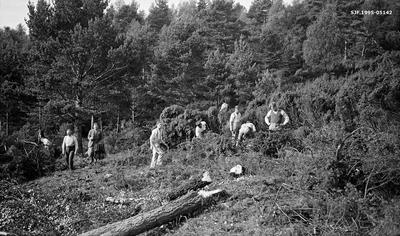 Fra skogrekruttskolen i Rogaland landbruksskoles skog på Tveit i Nedstrand i Tysvær kommune på Haugalandet