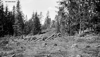 Skoglandskap i Bjørnebråten skog i Ski kommune