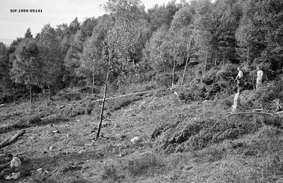 Ryddingsarbeid under skogrekruttskolen på Nedstrand i Tysvær i Nord-Rogaland høsten 1936