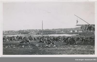 Fiskehoder på østsiden av Skagen