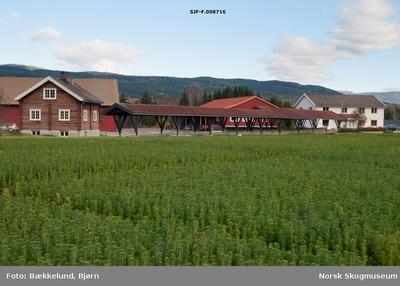 Noe av bebyggelsen ved Telemark planteskule ved Gvarv i Sauherad