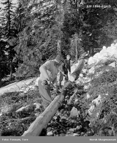 Barking av aptert granstamme i Bødalen i Vestre Gausdal i mars 1967