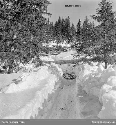Hankekjøringsveg og tømmer i Vestre Gausdal