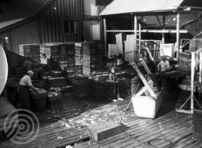 Fiskebruk i Stamsund