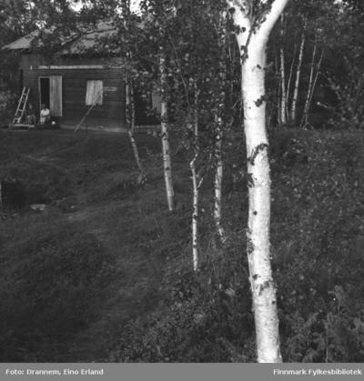 En hytte i skogen i Neiden-området