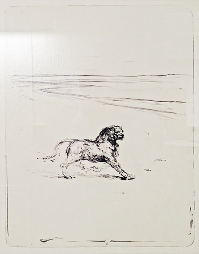 Løve ved bukt
