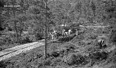 Vegbygging under skogrekruttskolen på Ulven i Os i Hordaland sommeren 1932