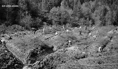 Grøfte- og ryddearbeid under skogrekruttskolen på Ulven i Os i Hordaland sommeren 1932